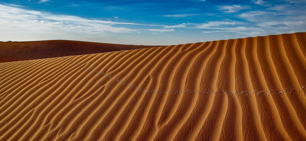 Sand tracks, Al-Khazna, Abu Dhabi, UAE